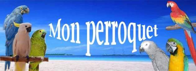 Forum Mon perroquet
