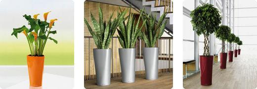 cherche grande plante deco pour mon salon page 1. Black Bedroom Furniture Sets. Home Design Ideas