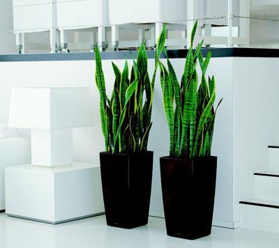 Cherche grande plante deco pour mon salon - Pot plante interieur design ...