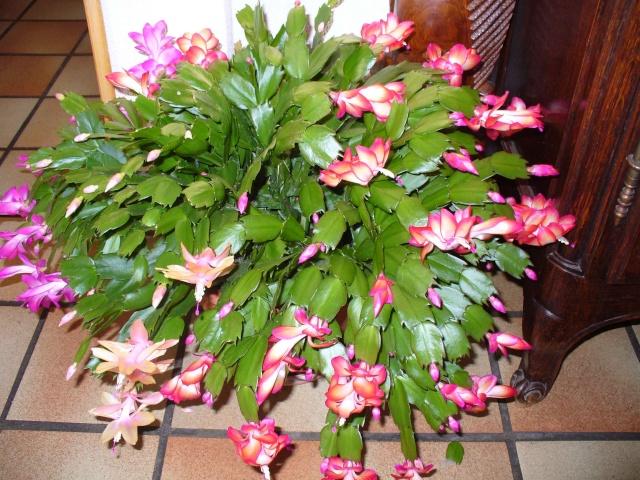 Mes plantes grasses - Noms de fleurs et plantes ...