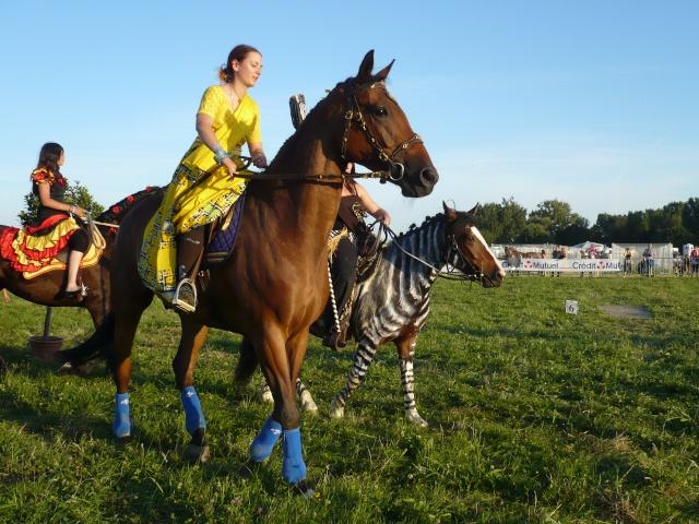 membre forum photos sujet  recherche deguisement pour cavalier cheval