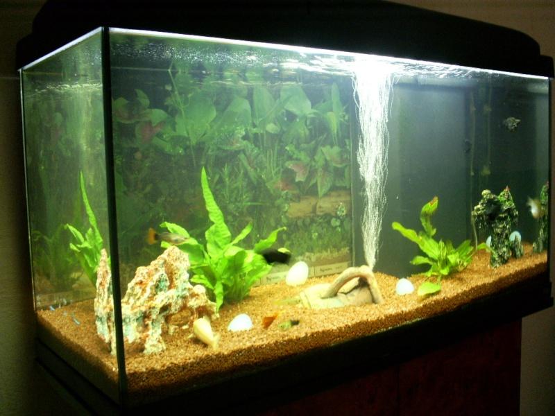 vend aquarium poissons etat neuf