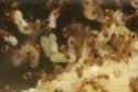 http://i84.servimg.com/u/f84/11/84/72/52/th/temnot21.jpg