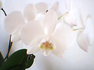 Jardinage l 39 orchid e de souki for Jardinage le monde