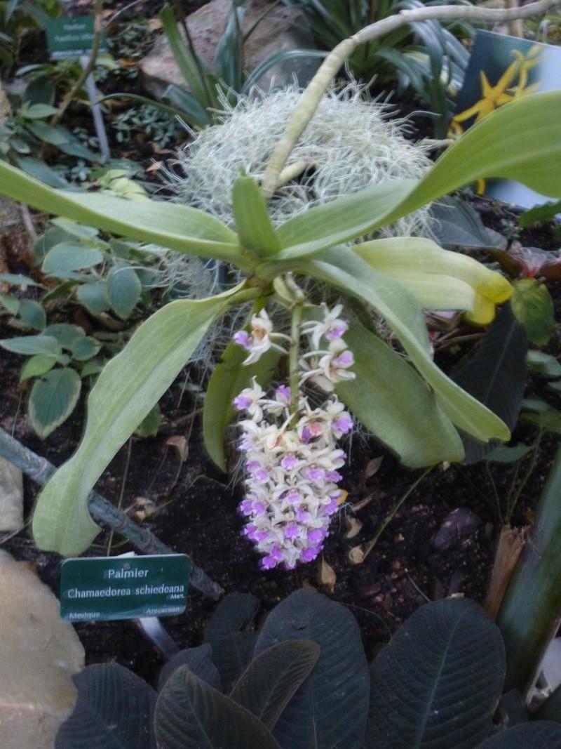 1001 orchid es au jardin des plantes f vrier 2016 for Au jardin des plantes