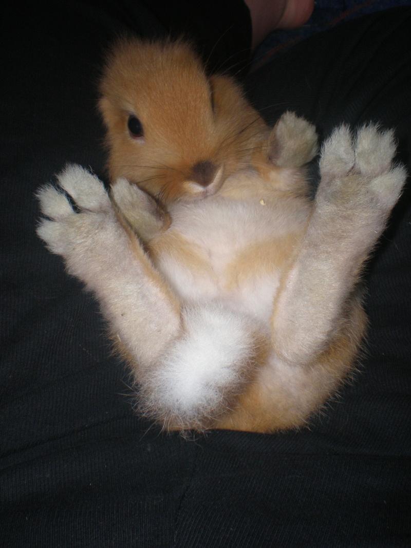 Boiterie de hyaska d chirure du ligament crois page 12 - Pinceau patte de lapin ...