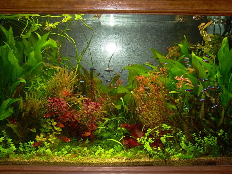 forum aquariophilie aqua lorca plantes sans substrat. Black Bedroom Furniture Sets. Home Design Ideas