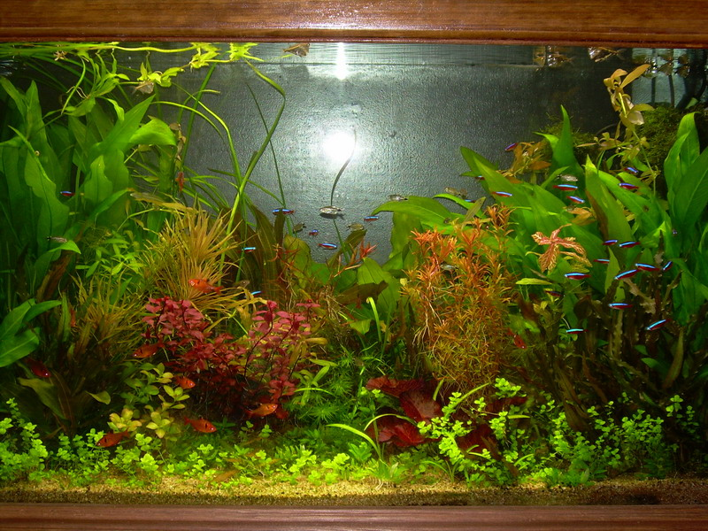 Plante aquarium facile sans substrat for Substrat pour aquarium