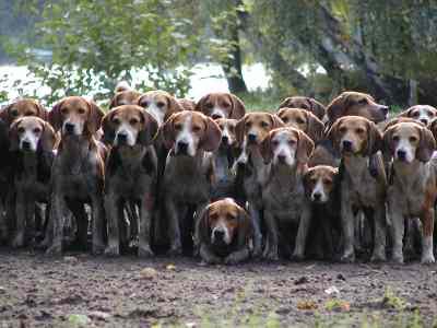 Le chien de Nicolas Sarkozy nommé à la tête de la S.P.A