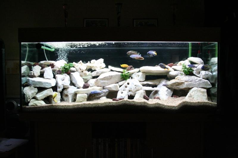 Decor Aquarium Cyclide