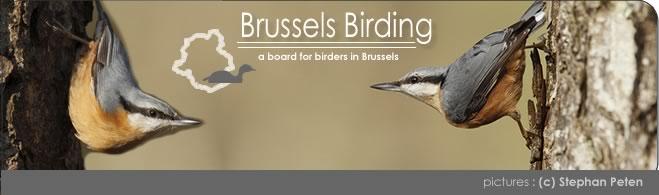 Brussels birding