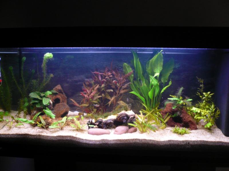 aquarium 120 l amazonien. Black Bedroom Furniture Sets. Home Design Ideas