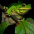http://i84.servimg.com/u/f84/13/64/46/63/frogs_10.jpg