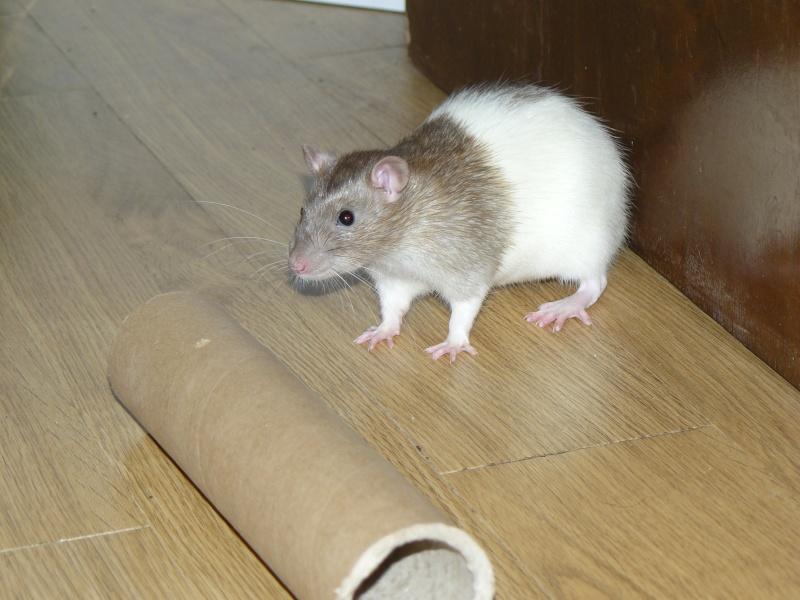 ratous15.jpg
