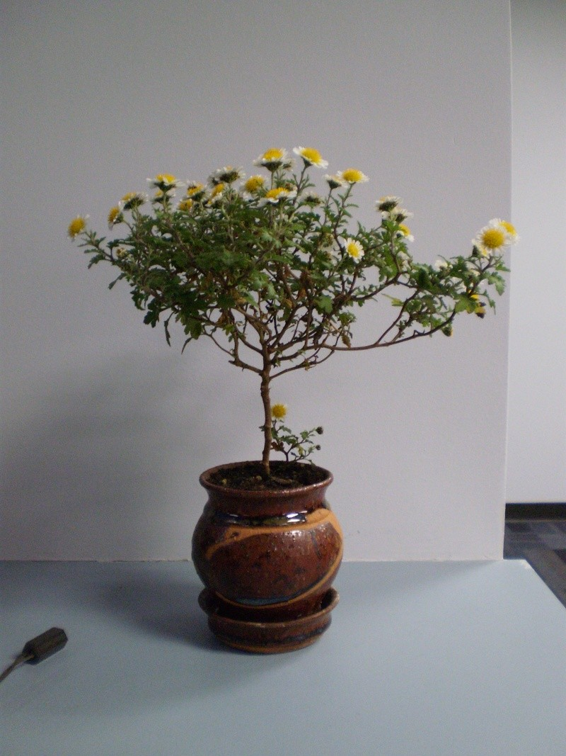 Bonsai Today # 31, 32, 33, 34, 35
