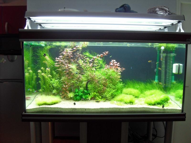 Vends 74 aquarium ouvert 430 litres meuble tout quip for Aquarium ouvert