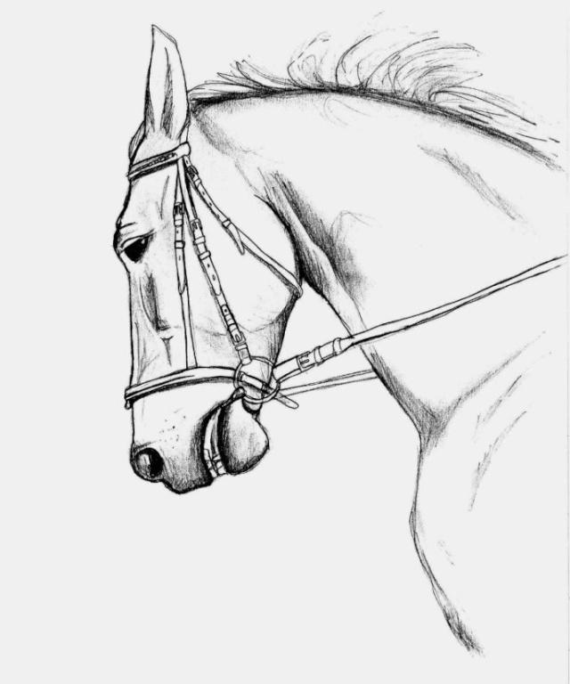 T te de cheval - Dessin de cheval magnifique ...