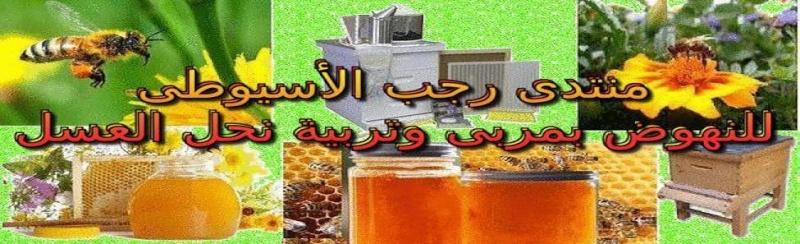 منتدى رجب الأسيوطى للنهوض بمربى وتربية نحل العسل