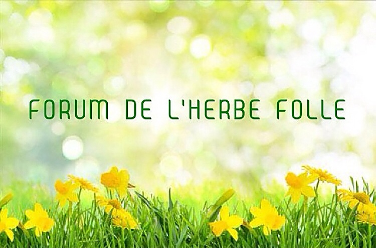 Forum de l'Herbe Folle