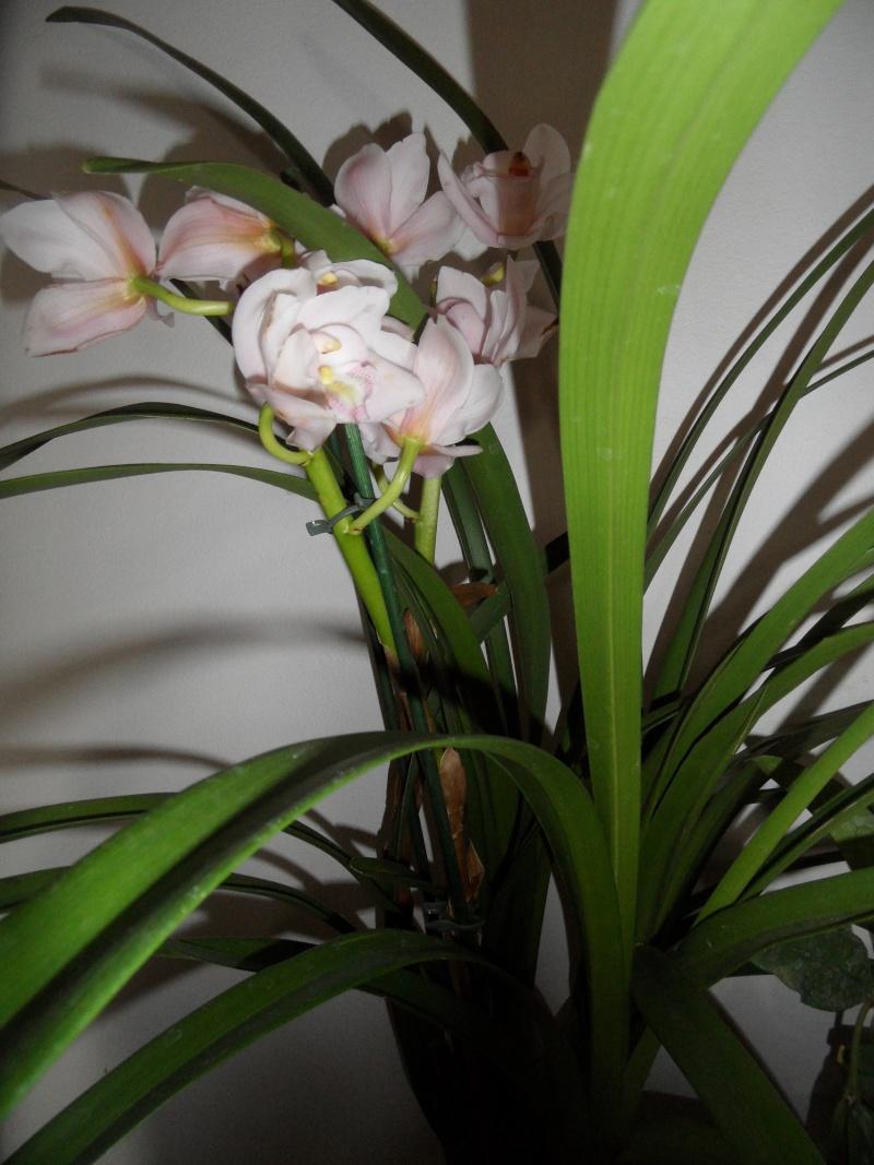 sous forum des orchid es comment entretenir son orchid e. Black Bedroom Furniture Sets. Home Design Ideas