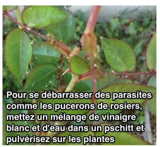 Les parasites et au-dessus des parasites les insectes