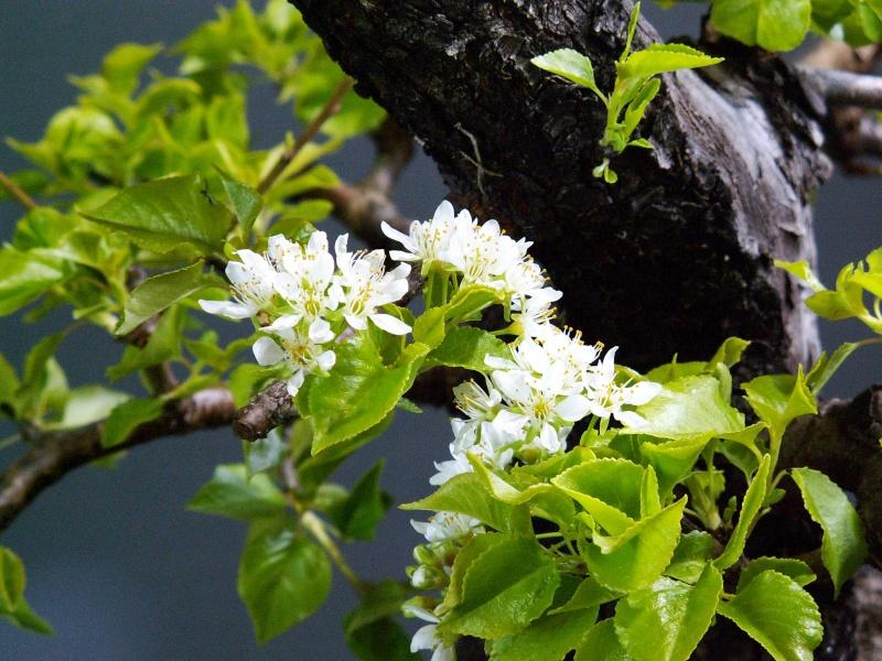blosso11.jpg