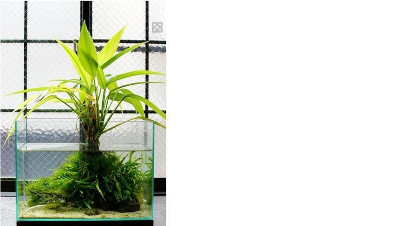 Recherche nom de plante et information poubellarium for Recherche plante
