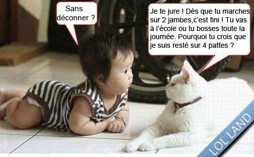 Gut bekannt HUMOUR - Drôles de bêtes - Page 14 QQ31