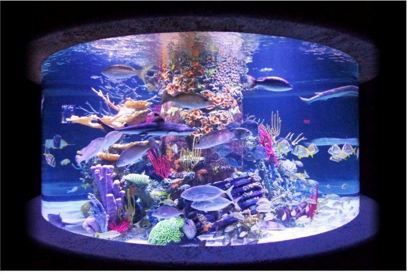 projet aquarium 100L fish only