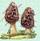 Champignons et cueillettes