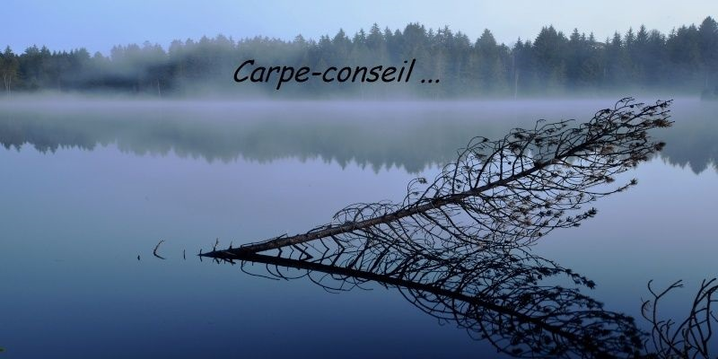 http://carpe-conseil.forums-actifs.com/