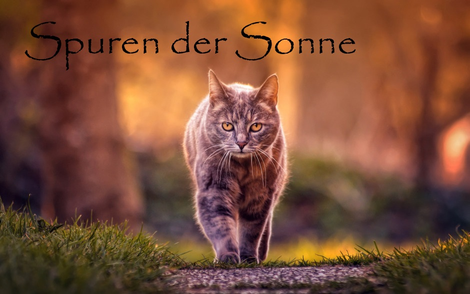 Warrior Cats Spuren der Sonne