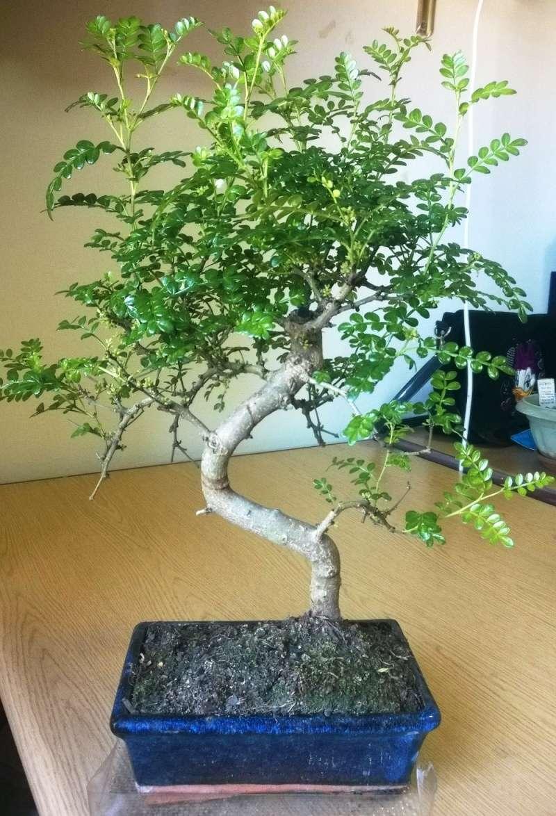 tree_p10.jpg